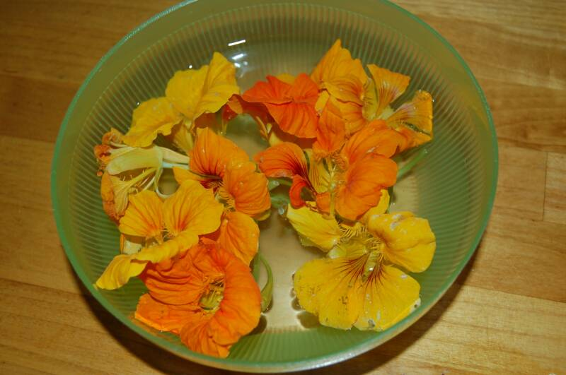 Yes, you can eat nasturtiums!